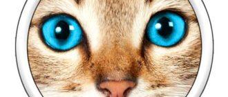 Логотип игры Угадай фото! 2